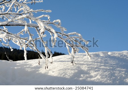 icy branches against blue sky - stock photo