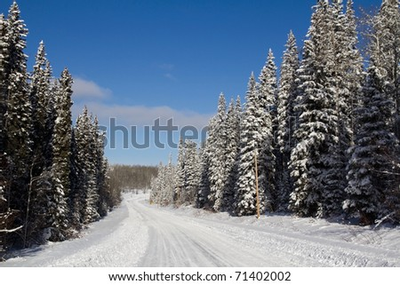 Icy road with snow covered pines - stock photo