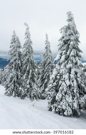 Icy snowy fir trees on top of winter hill (Carpathian). - stock photo