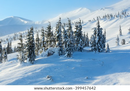 Icy snowy fir trees on winter morning mountain slope in cloudy weather (Carpathian). - stock photo