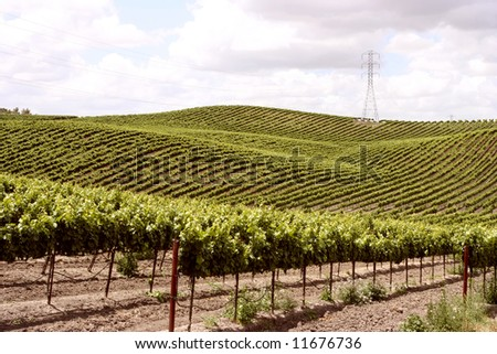 Idillyc vineyards on small slopes on a spring day - stock photo