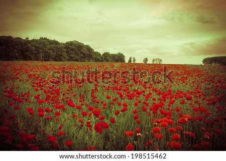 Idyllic field with beautiful red poppies flowers against the sunset sky - stock photo
