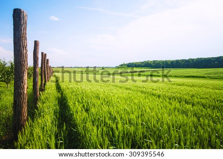 Idyllic green wheat field on a sunny spring day - stock photo