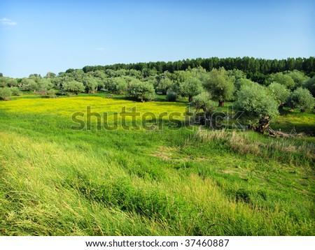 Idyllic meadow in summer - stock photo