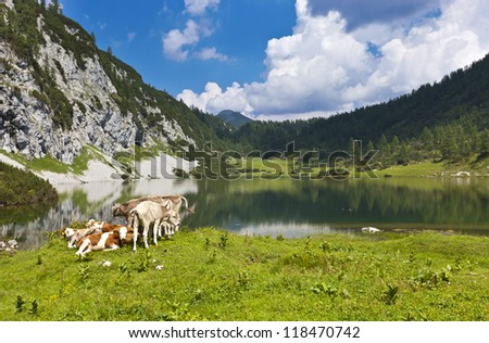 Idyllic pasture in the mountains with a small group of cows relaxing at a lake.