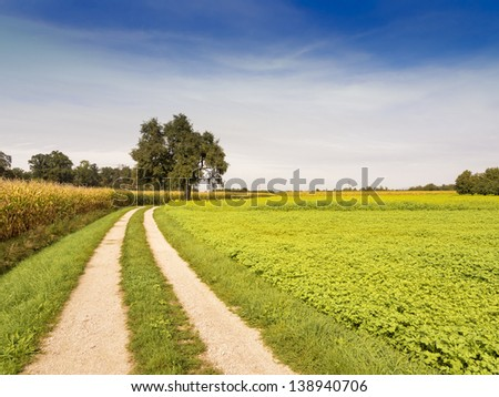 idyllic rural summer landscape with green grass, curved dirt road and blue sky