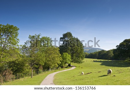 Idyllic rural view of pretty farmland and healthy livestock, in the beautiful surroundings of the Lake District, England, UK. - stock photo