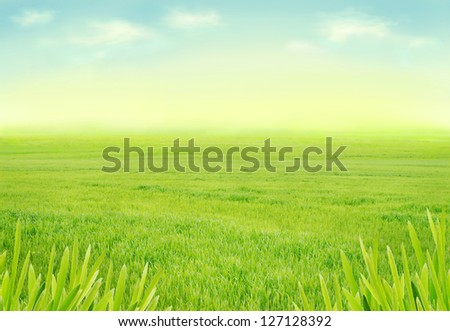 Idyllic spring meadow - stock photo