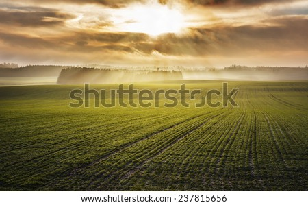 Idyllic sunrise over foggy autumn green fields - stock photo