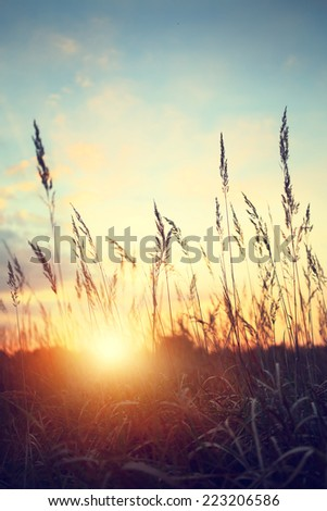 idyllic view of the sunset and wild field