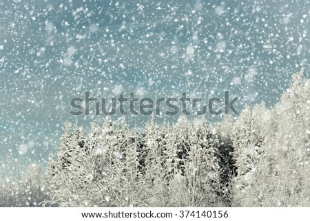 Idyllic winter scene where it is snowing in the forest and you can see the snowflakes. - stock photo
