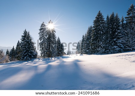 idyllic winter snow landscape with forest and sun beams through tree - stock photo
