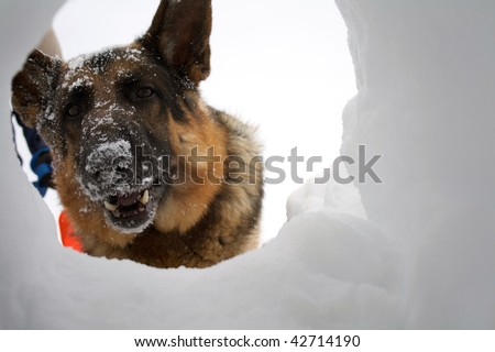 If you are buried in an avalanche, who could imagine a more welcome sight that your hero looking down a hole at you. - stock photo