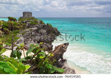 Iguana on the cliff of Tulum, Mexico - stock photo