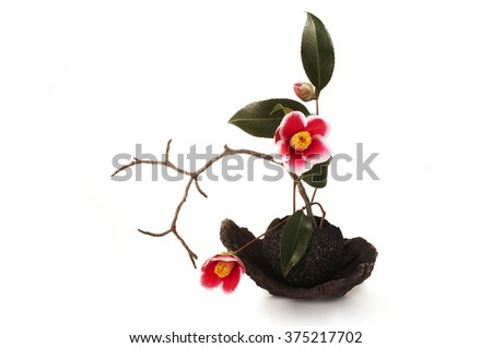 ikebana with camellia flowers on a white background