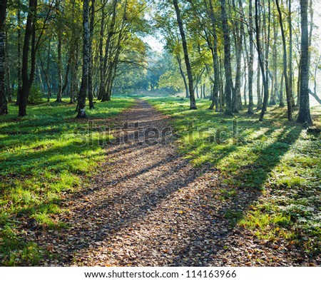 Illuminated by sunshine alley in autumn Park - stock photo
