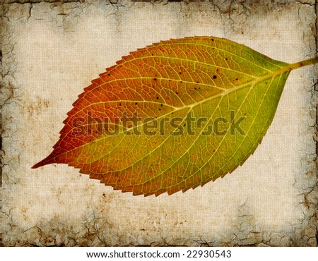 Illustrated grunge image of a hydrangea leaf.