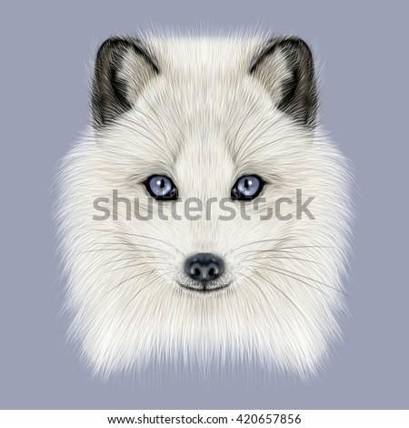 Illustrated Portrait of Arctic fox. Cute white fluffy face of Polar Fox on dark blue background. - stock photo