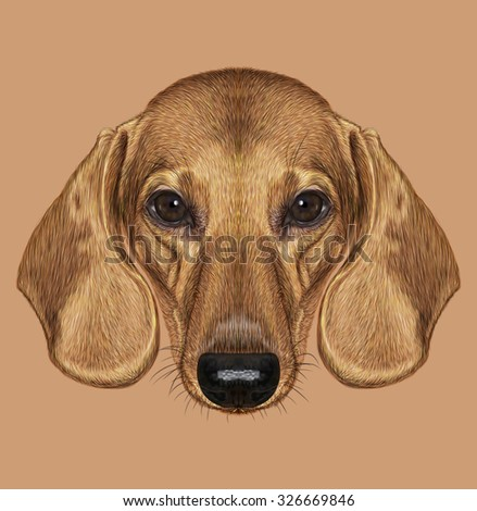 Illustrated Portrait of Dachshund Dog. Cute short haired red dachshund. - stock photo