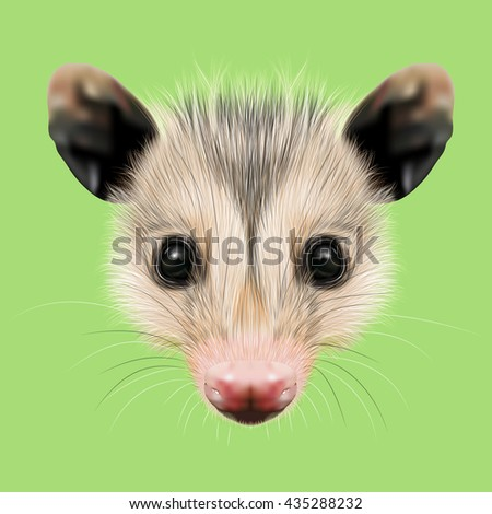Illustrated Portrait of Opossum. Cute fluffy face of Opossum on green background. - stock photo