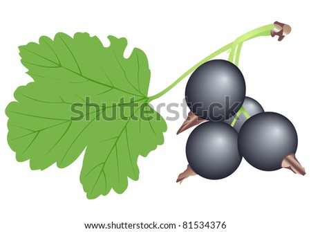 Illustration of a branch of a black currant - stock photo