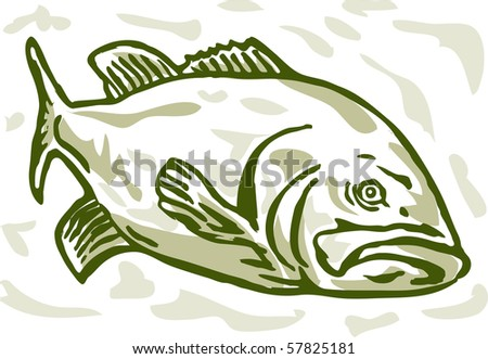 illustration of a largemouth bass swimming