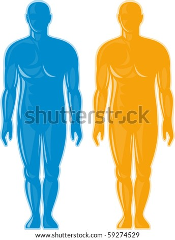 illustration of a Male human anatomy standing front - stock photo