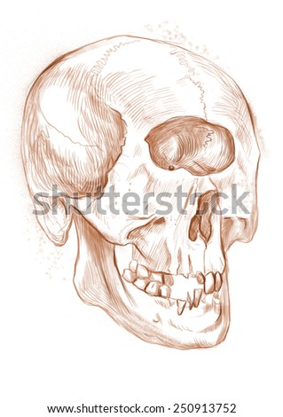 Illustration of a series of legendary animals and monsters (skeleton): CYCLOPS, skull. An hand drawn and painted full sized illustration (Original). Version: Drawing on white background. - stock photo