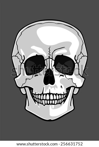 Illustration of a skull isolated on grey (raster version) - stock photo