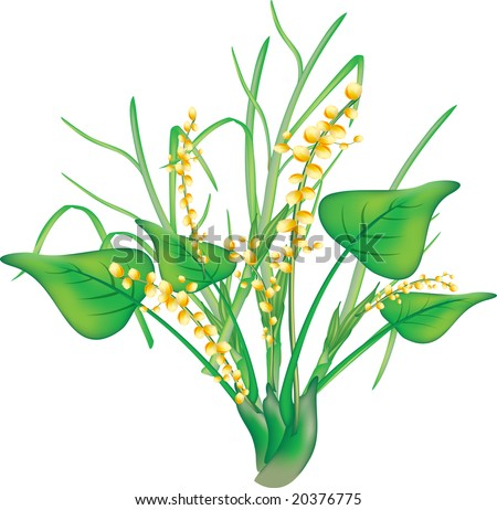 illustration of an angipsperm with yellow flowers