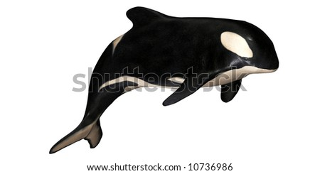 Illustration of an isolated Orca on a white background - stock photo