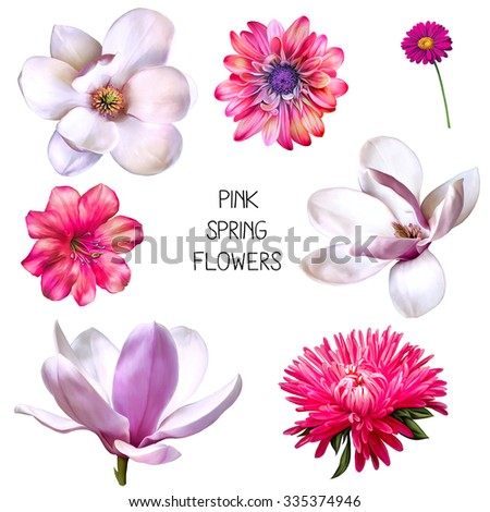 Illustration of beautiful magnolia, pink bell flower, bright pink chrysanthemum and aster, Spring flower isolated on white background - stock photo