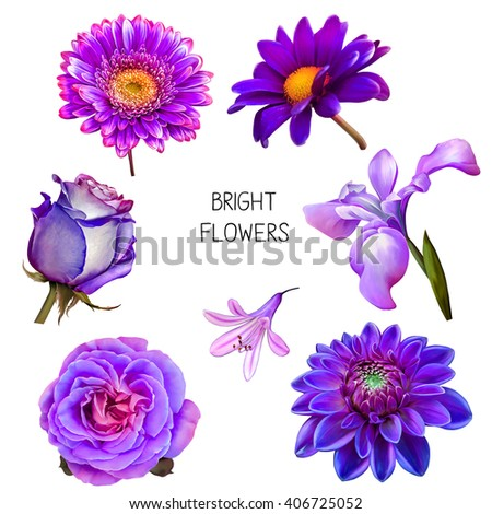 Illustration Of Beautiful Pink Blue And Purple Flowers Set Spring Camellia