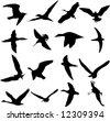 Illustration of Birds-9 - stock photo