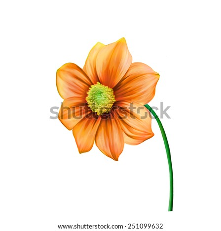 illustration of Bright colorful Dahlia flower, Spring flower.Isolated on white background. - stock photo