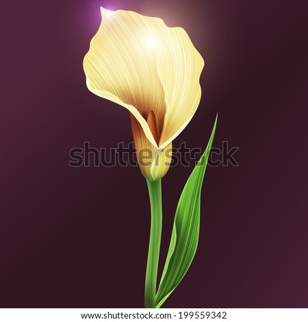 Illustration of calla lily flower and green leaves background - stock photo