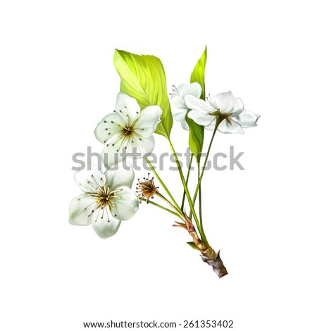 illustration of Cherry blossom flowers with leaves. Tree branch