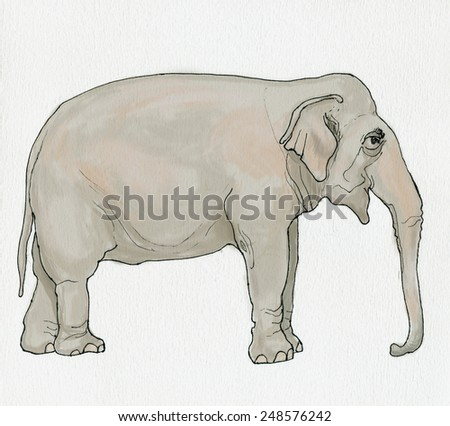 Illustration of elephant. Handmade ink drawing on watercolor paper. - stock photo