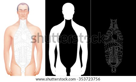 Illustration of excised male body with drawn outlined inner organs. Perfect to combine with vector images of this set. Completed with alpha channels. - stock photo
