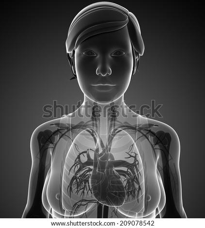 Illustration of female x-ray respiratory system artwork - stock photo