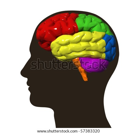 Illustration of human brain on a male head silhouette - stock photo