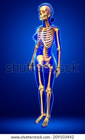 Illustration of human skeleton side view - stock photo