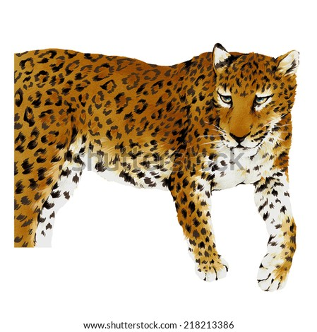 illustration of leopard, - stock photo
