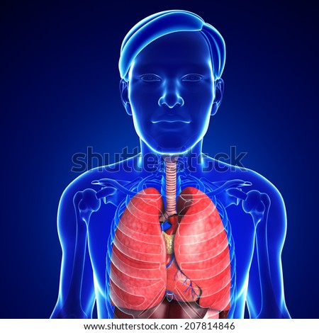 Illustration of male respiratory system - stock photo