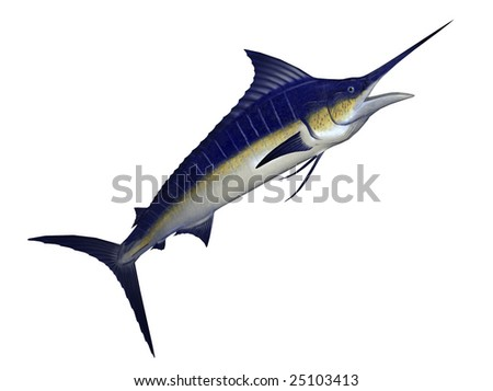 illustration of marlin fish isolated on white background