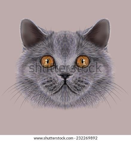 Illustration of Portrait British short hair Cat. Cute silver Domestic cat with orange eyes. - stock photo