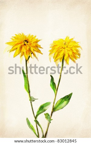 Illustration of watercolor cone flower on a vintage background - stock photo