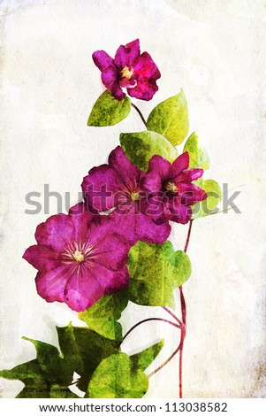 Illustration of watercolor crimson clematis on a vintage background - stock photo