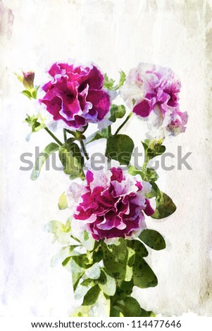 Illustration of watercolor crimson petunia on a vintage background - stock photo