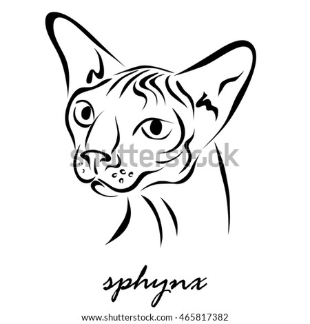 Illustration shows a cat breed sphinx